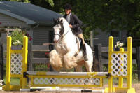 Mr. Biker Conners N'Co, 2001 imported Gypsy Vanner Horse stallion