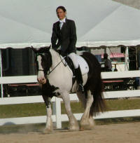 Crown Darby's Bali, 2000 Gypsy Vanner Horse mare
