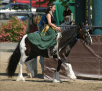 Little Miss Checkmate, 2003 imported Gypsy Vanner Horse mare