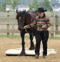 Stoke The Fire, 2005 imported Gypsy Vanner Horse mare