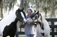 Crown Darby and Shampoo Girl, 1995 Gypsy Vanner Horse mares