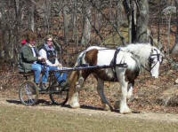 Gypsy Woods Dory, 2003 Gypsy Vanner Horse mare