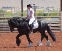 Rock Ranch Eclipse The Sun, 2007 Gypsy Vanner Horse stallion