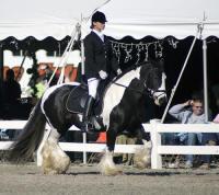Kuchi, 1999 Gypsy Vanner Horse mare