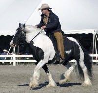 WR Panda Rose, 1998 imported Gypsy Vanner Horse mare