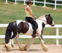 The King's Good Friday, 2005 Gypsy Vanner Horse stallion