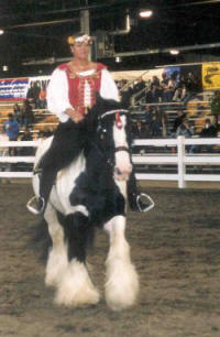 Gypsy King, imported Gypsy Vanner Horse stallion at Equine Affaire Massachusetts 2003