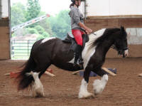 Jordan of Kastle Rock, 2000 imported Gypsy Vanner Horse mare