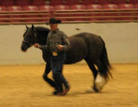 WR Lizzy Rose, 2011 Gypsy Vanner Horse filly