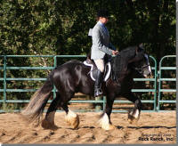 Rock Ranch Master, 2004 imported Gypsy Vanner Horse stallion