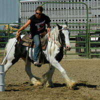 Perfect Storm's Lady Morgana, 2009 Gypsy Vanner Horse mare