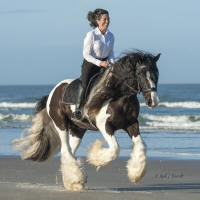 Grey Ghost Phantom, 2006 Gypsy Vanner Horse gelding