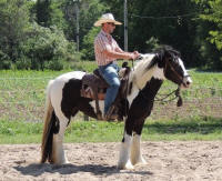 Feathered Gold Presence, 2013 Gypsy Vanner Horse filly
