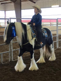 Westmoreland Quality Street, 2009 Gypsy Vanner Horse mare