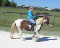 ACB Royal Reign, 2004 Gypsy Vanner Horse mare