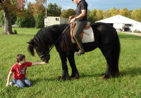 GG Latcho's Shadow, 2007 Gypsy Vanner Horse colt