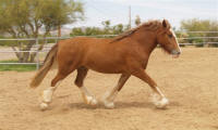 Rock Ranch Tommy Girl, 2007 Gypsy Vanner Horse mare