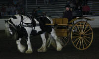 Babydoll, 1999 imported Gypsy Vanner Horse mare