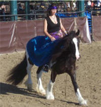 Checkers, imported Gypsy Vanner Horse filly