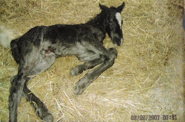 Newborn horse standing - photo#16