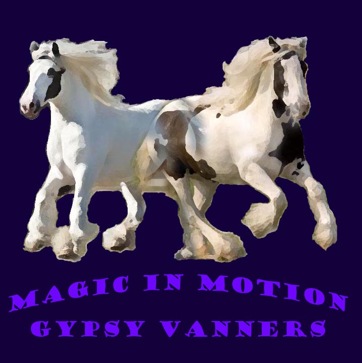 Magic In Motion Vanners