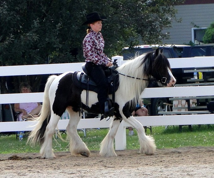 Feathered Gold Tadgh, 2008 Gypsy Vanner Horse gelding