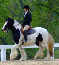 Lake Ridge British Truffle, 2005 Gypsy Vanner Horse mare